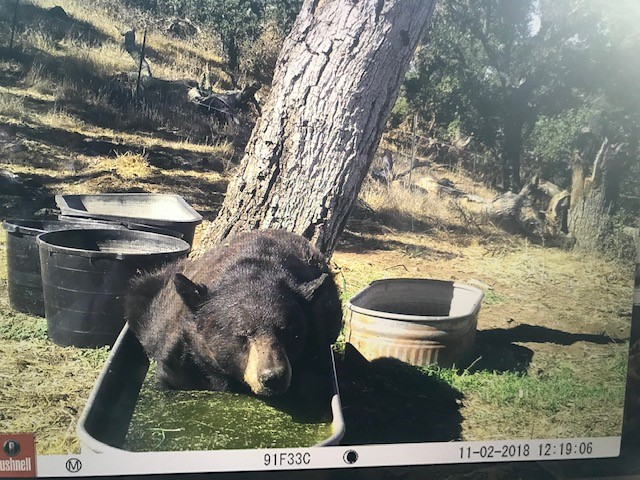 Bear in Basin