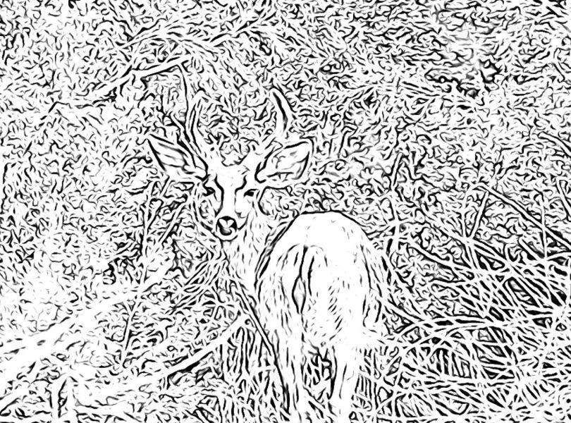 Deer You See Me