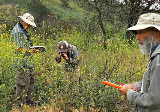Cal Native Plant Society in the Field