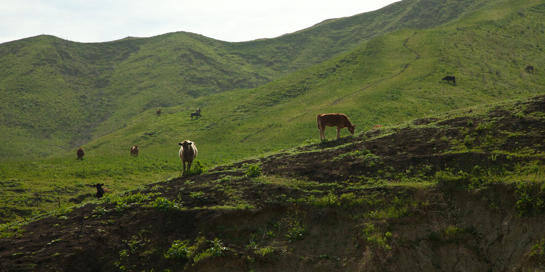 ChrisRyan_RV_Cattle
