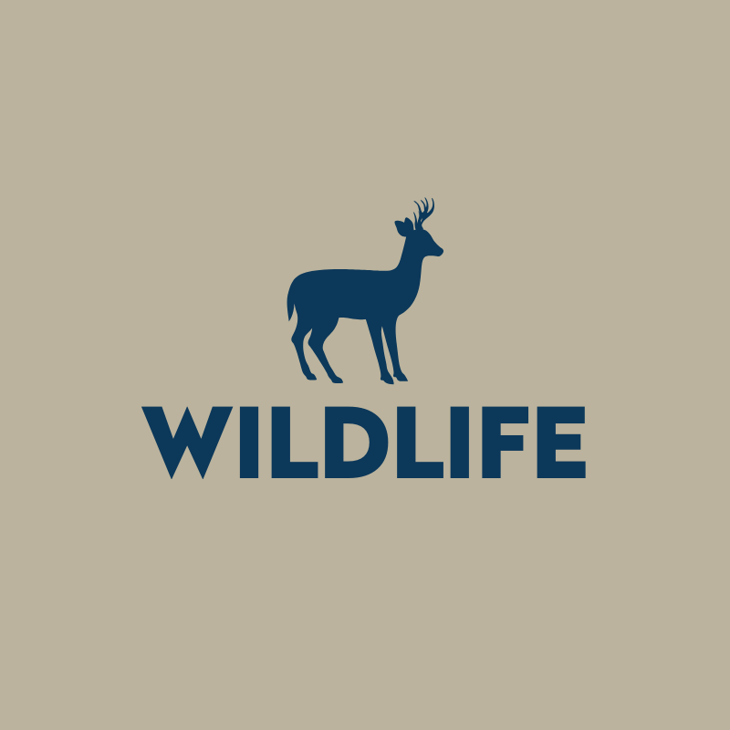 Wildlife Deer Graphic